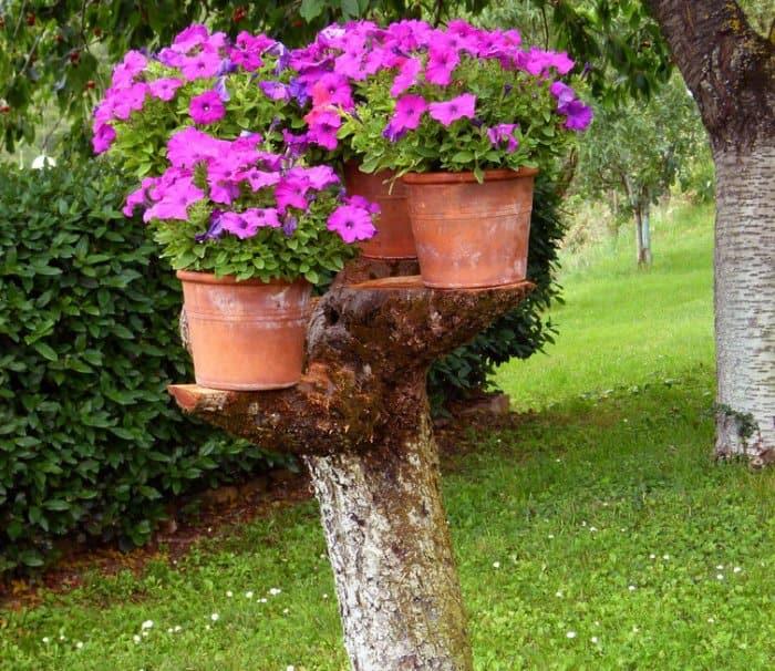 Tree stump with flower pots
