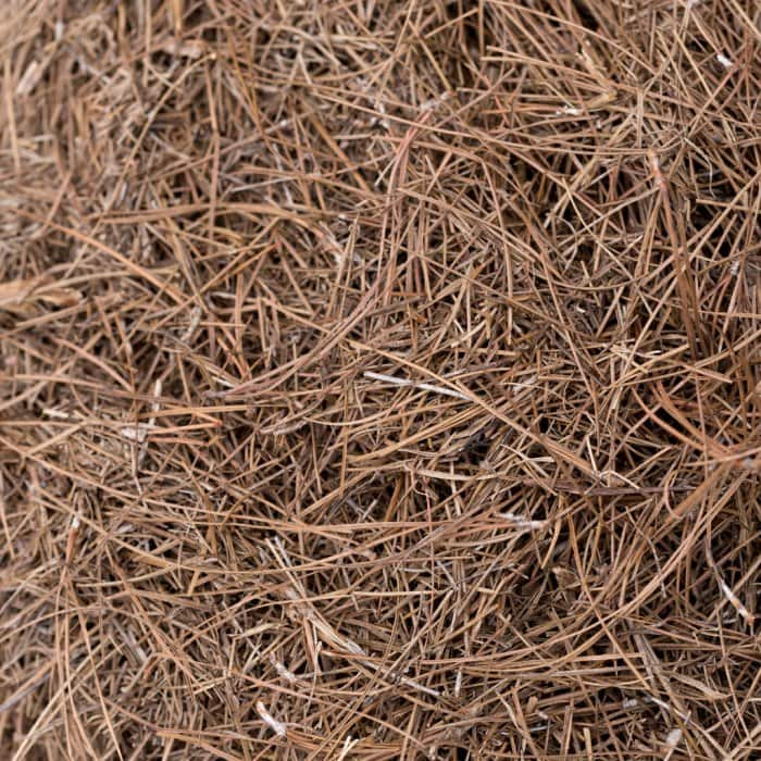 Pine needle mulch or pine straw