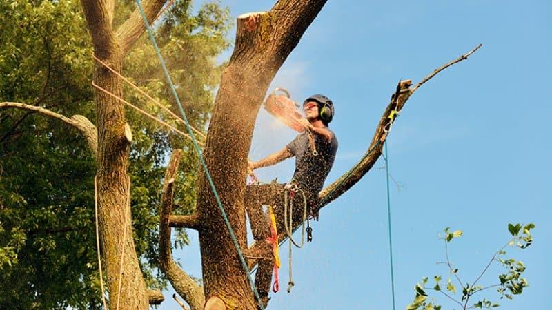 Tree professional cutting down tree (Photo by jStock - stock.adobe.com)