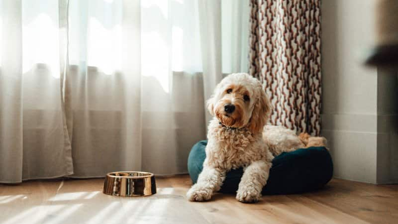 A dog resting on his bed on a sunny day (Photo by Oscar Wong/Moment via Getty Images)
