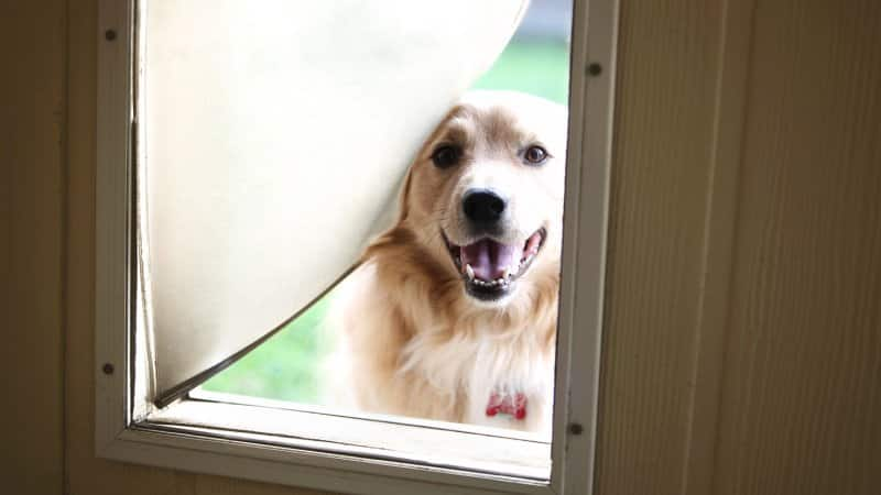 Dog looking through dog door (Photo by TriggerPhoto / iStock/Getty Images Plus via Getty Images)