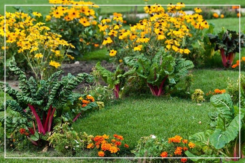 edible landscape in yard (Photo by Arjuna Kodisinghe/Shutterstock.com)