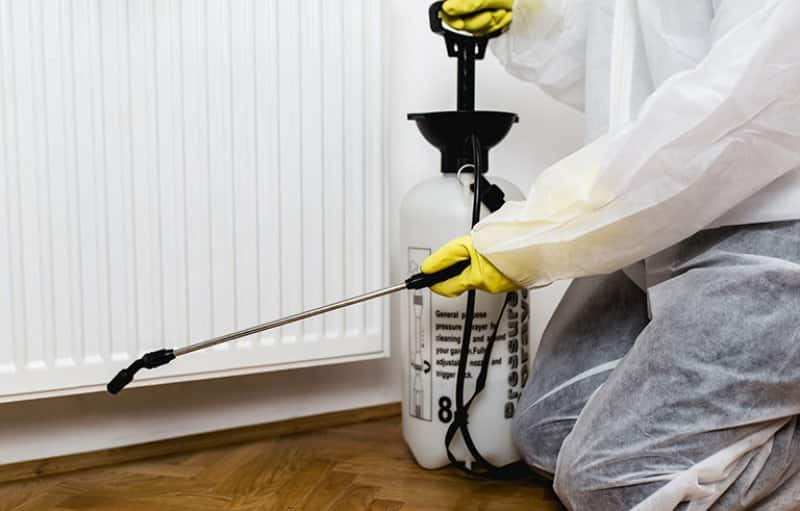 exterminator sprays kitchen baseboards (Photo by  Group4 Studio via iStock / Getty Images Plus)