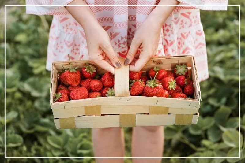 woman holding a basket of strawberries  (Photo by Damian Lugowski/Shutterstock.com)