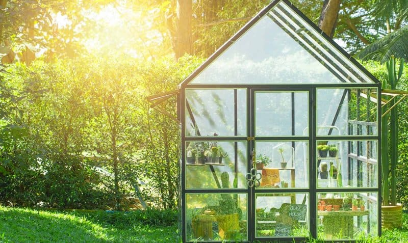 Greenhouse in a home garden (Photo by Quality Stock Arts - stock.adobe.com)
