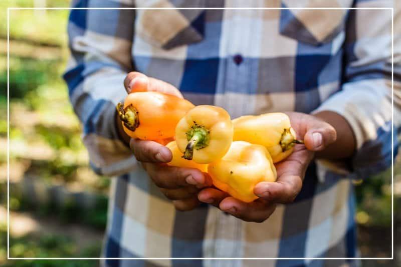 man holding bell peppers (Photo by Switlana Sonyashna/Shutterstock.com)