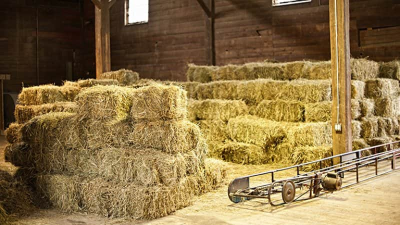 The interior of a pole barn with hay bales (Photo by Elenathewise - stock.adobe.com)