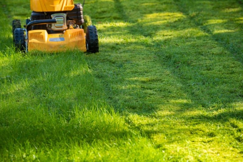 yellow lawn mower mowing bright green grass (Photo by Jan Hakan Dahlstrom/Stone/Getty Images.)