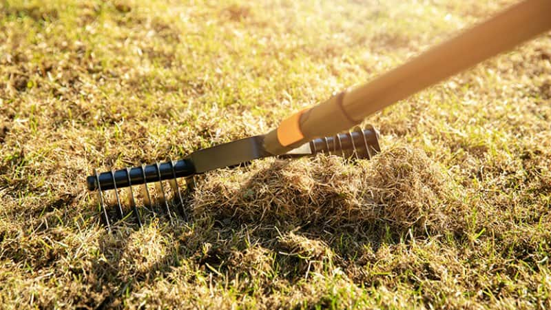A lawn rake on a sunny day (Photo by ronstik - stock.adobe.com)