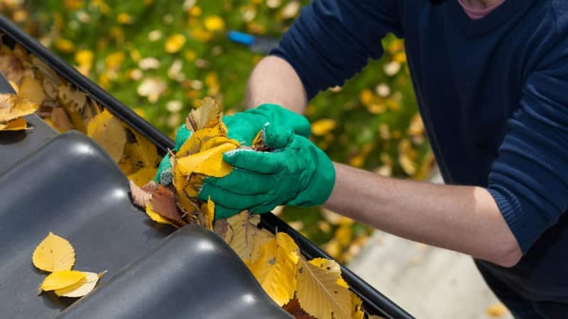 A man cleaning the gutter from leaves (Photo by Photographee.eu - stock.adobe.com)