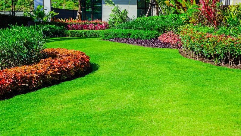 Nicely manicured lawn (Photo by singjai - stock.adobe.com)