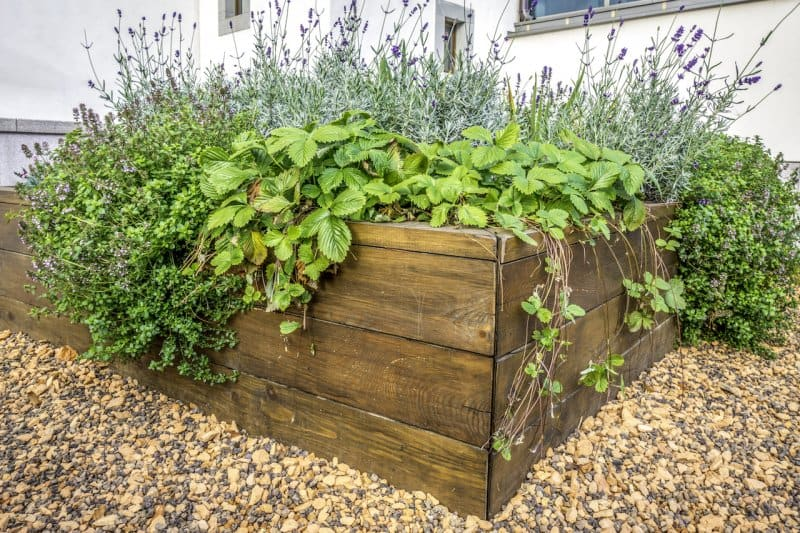 a raised bed of green plants (Photo by © Jurgita Vaicikeviciene / EyeEm/Getty Images.)