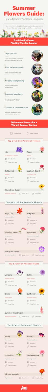 Summer Flowers Guide