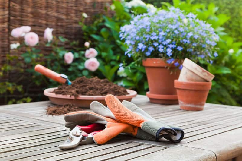 Gardening supplies on table (Photo by Westend61 via Getty Images)