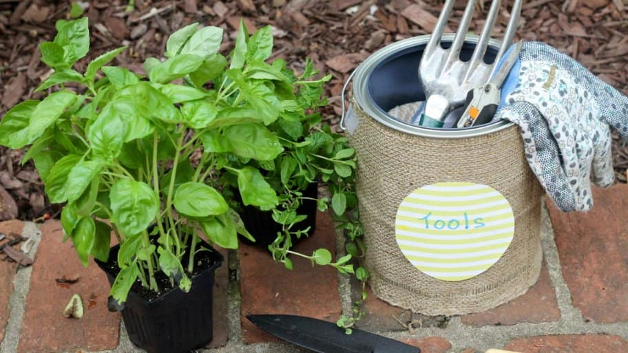 A potted plant with some small garden tools