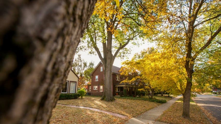 Fall colored leaves and trees in Indianapolis Meridian Kessler neighborhood