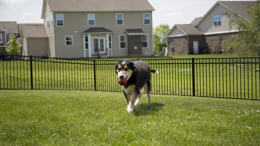 Black brown dog playing on grass lawn (Photo by Eldon Lindsay)