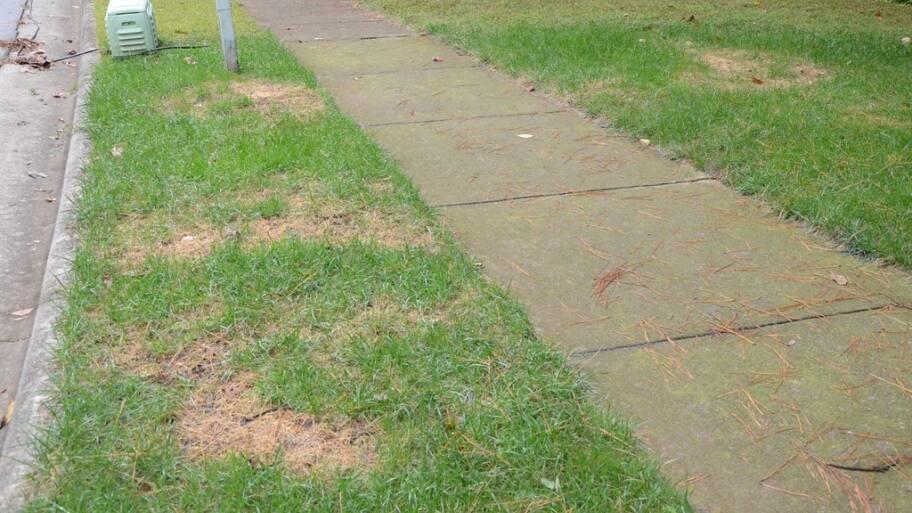 dead spots on lawn from over-fertilization