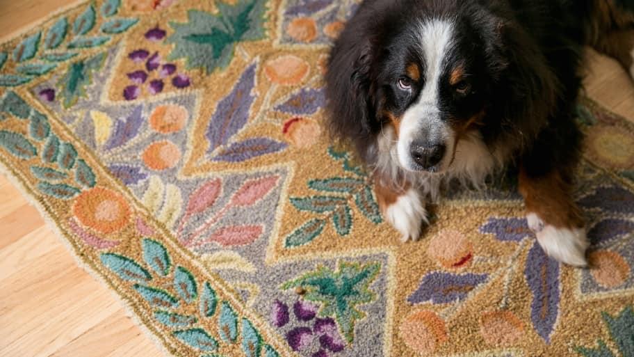 dog sitting on a rug