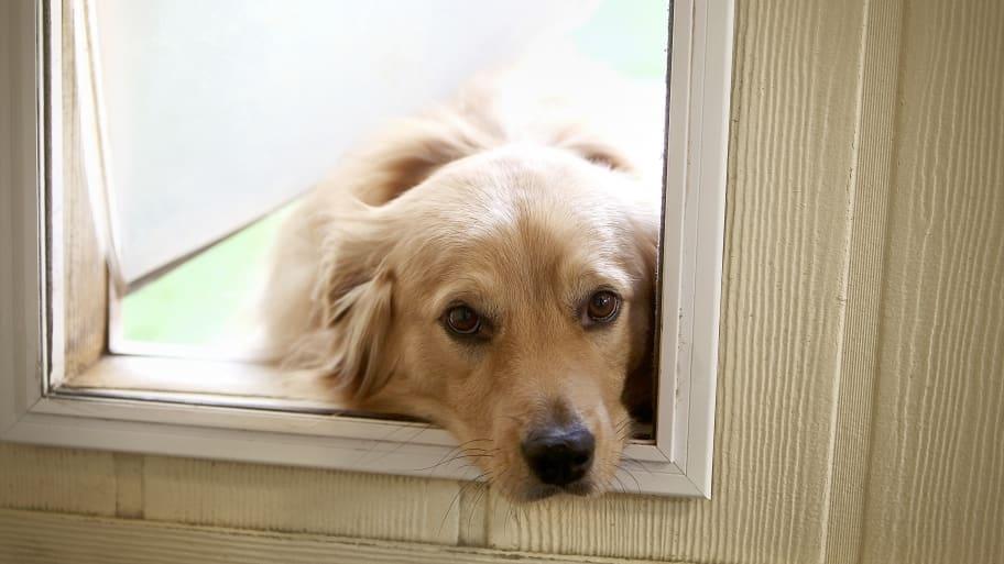 dog with head inside dog door