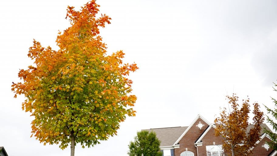 red and orange fall leaves on tree