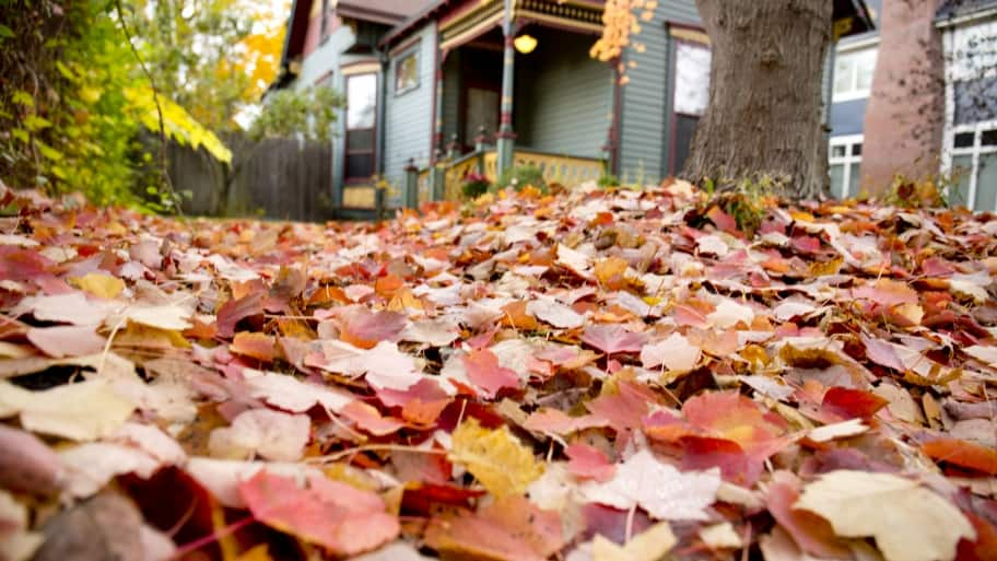 fall leaves next to a house