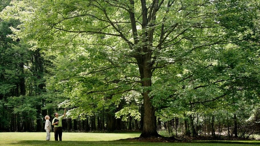 arborist checking tree with homeowner