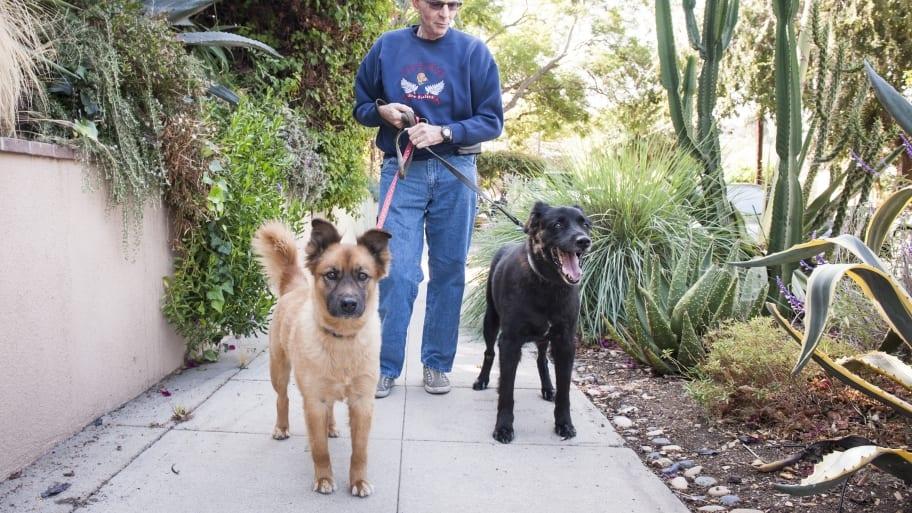 How to Find a Trustworthy Dog Walker   Angi