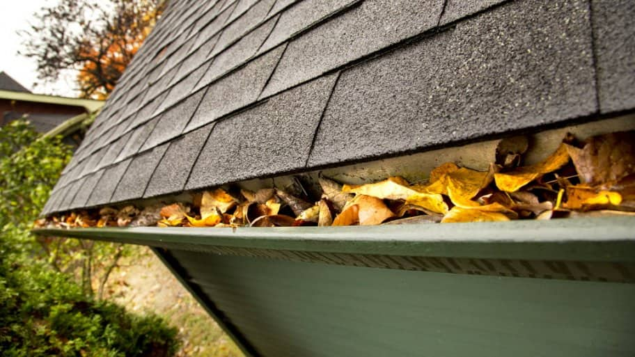 gutter filled with fallen leaves