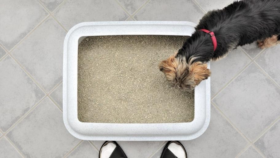 dog by litter box