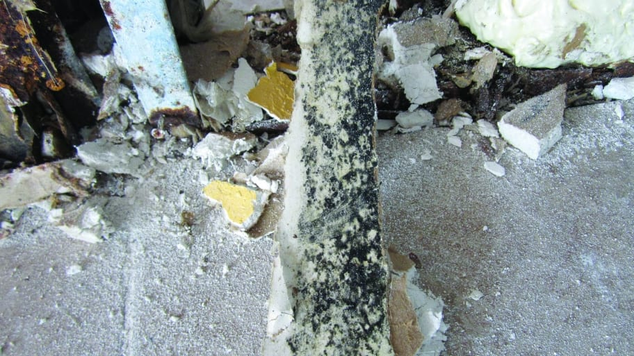 mold from a leak (Photo by Photo courtesy of DriRite)