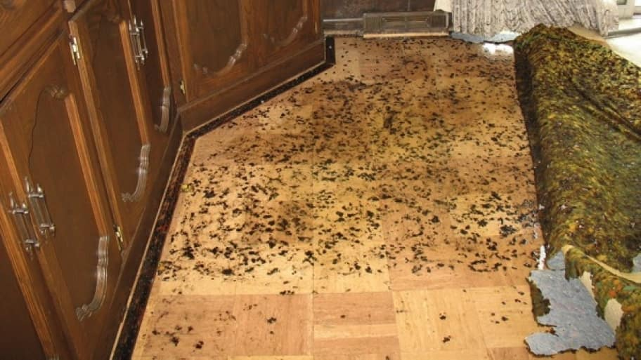 Standing water leads to mold growth. If your home is ever flooded, cut up and toss out flood-soaked carpets and ventilate your rooms as soon as possible. (Photo courtesy of Teresa K., Beachwood, Ohio)
