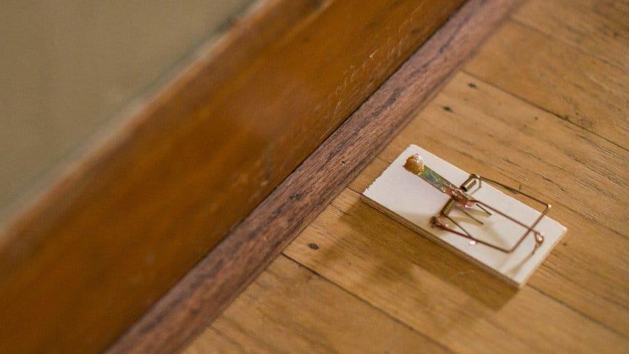 mousetrap for pest control