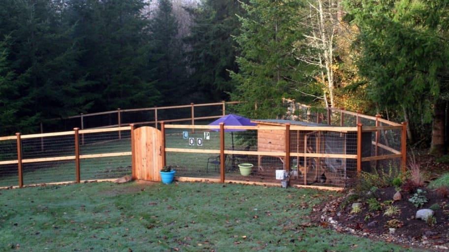 Chicken coop fence