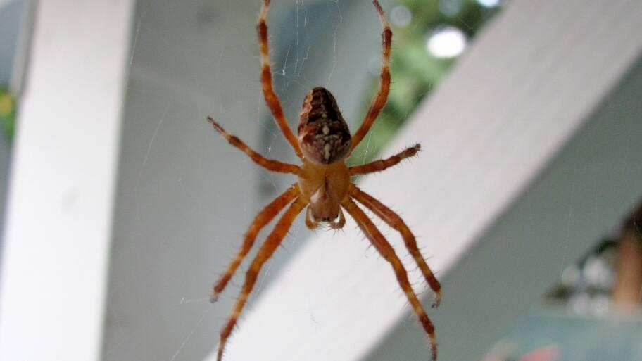 spider climbs web