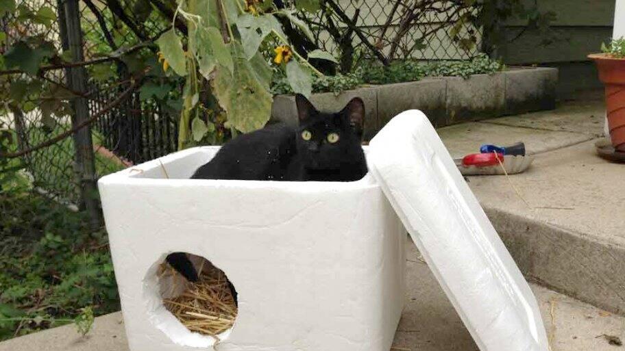 styrofoam feral cat shelter