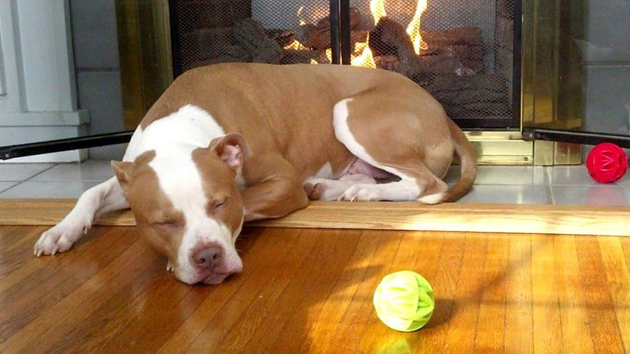 sleeping dog next to fireplace and dog toys
