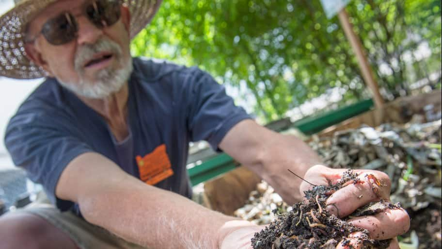 Master gardener presents a handful of red worms and worm castings in an outdoor vermicompost bin