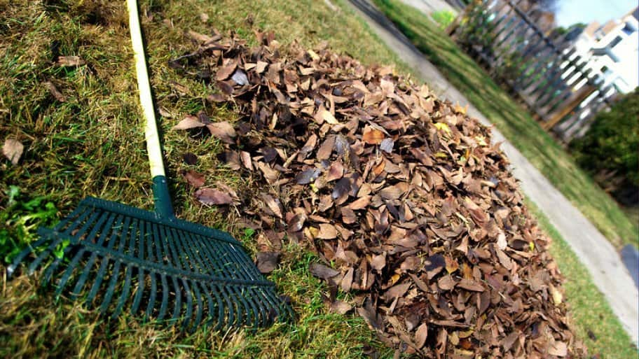 Rake and pile of leaves on a lawn