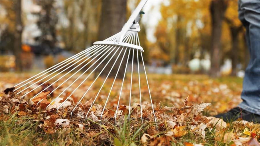 Raking leaves in back yard (Photo by New Africa - stock.adobe.com)