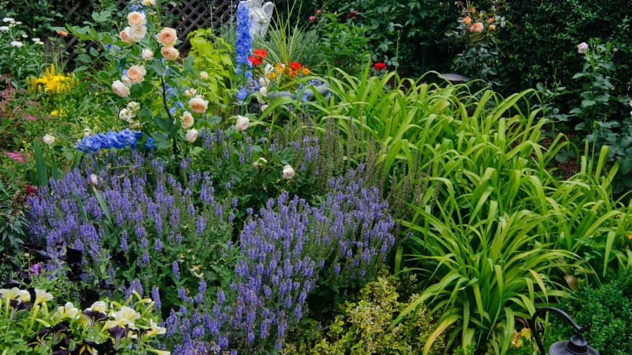 garden filled with purple, white orange and red flowers