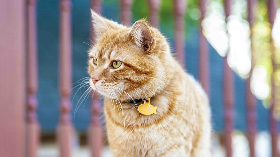 cat with collar standing next to stair railing