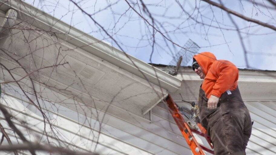 man on ladder removing animal from gutter on roof