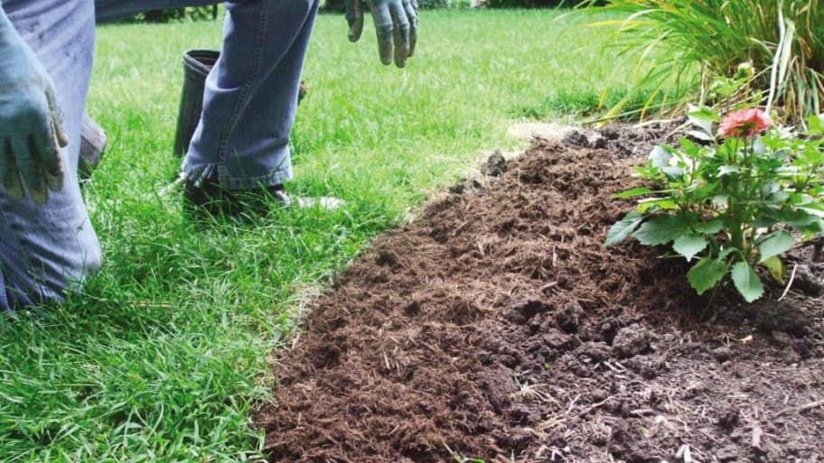 Mulch in yard