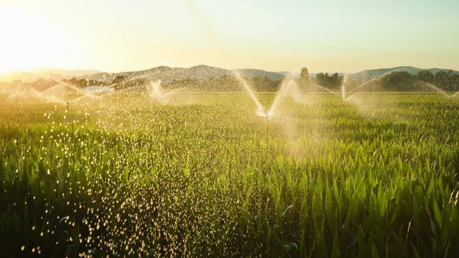 Backflow irrigation system in cornfield