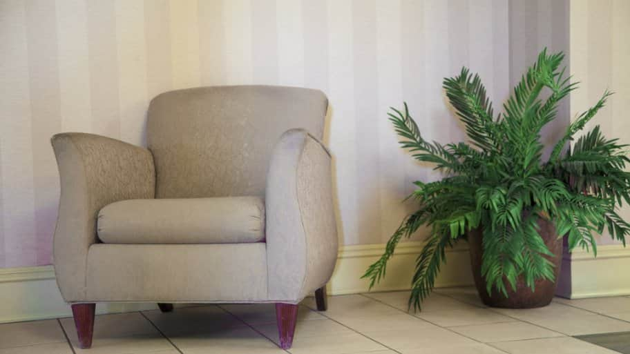 a tan fabric chair with a house plant