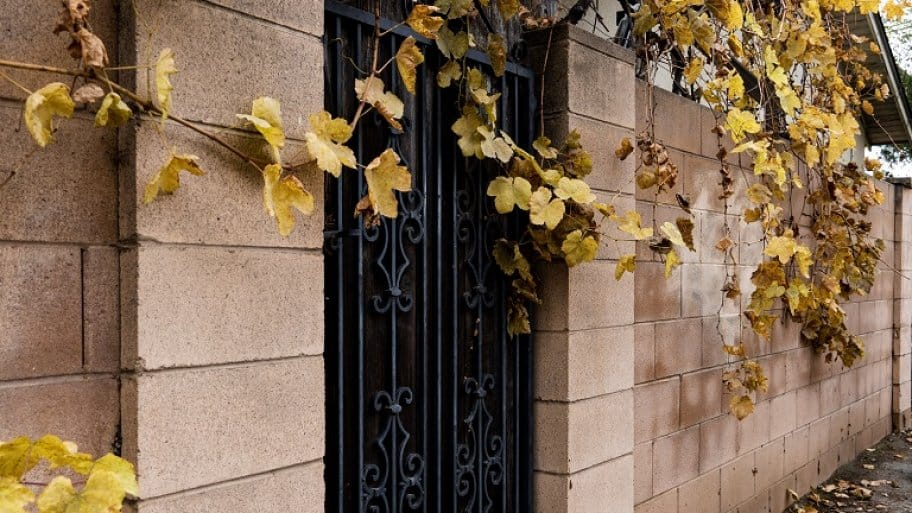 Cinder Block Wall With Leaves