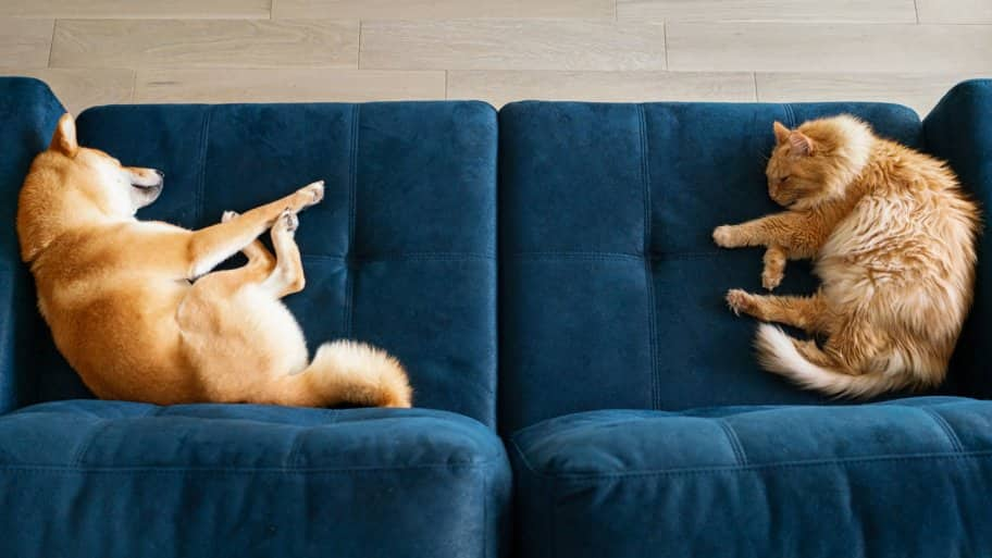 A dog and a cat sleeping on a blue couch
