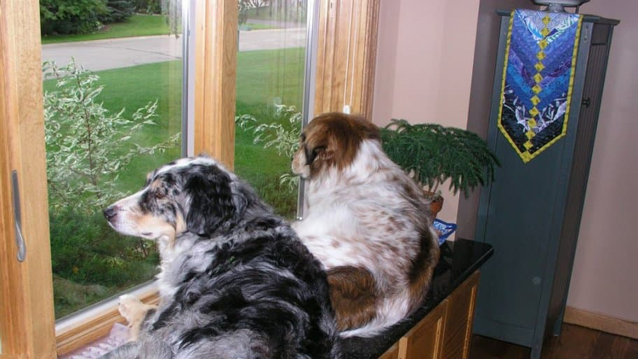dogs on window sill