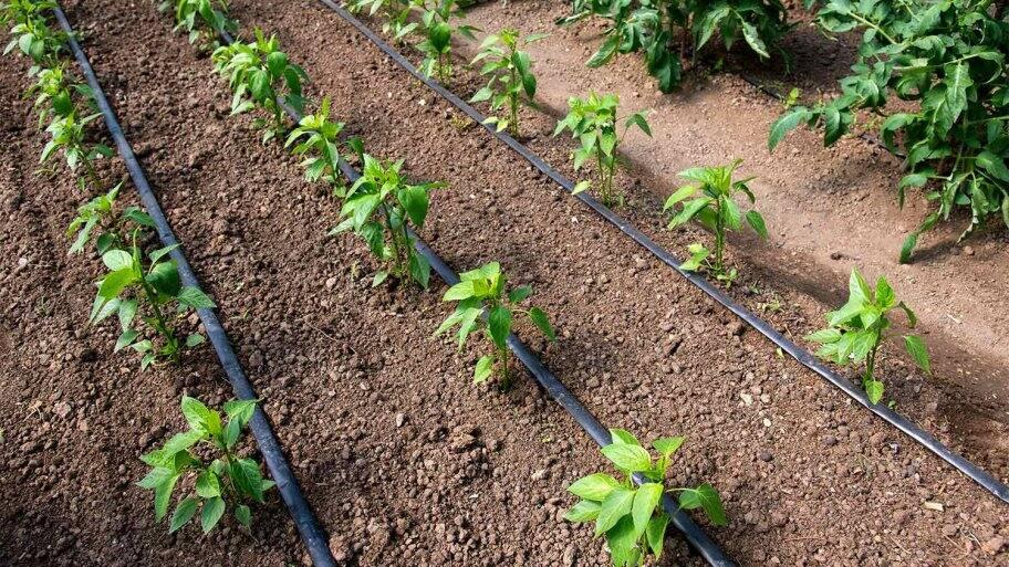 drip irrigation garden